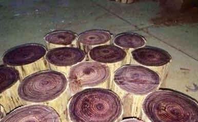 小叶紫檀,崖柏等种类的原木材料