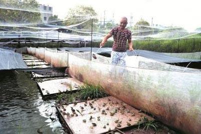 建个青蛙养殖场年赚百万