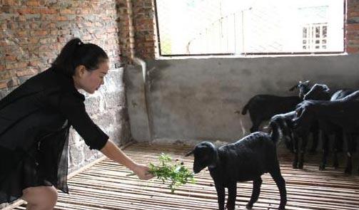 羊和猪 可爱壁纸