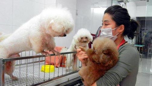 """2017年国庆与中秋撞期,最长的""""黄金周""""假期里,很多人都会出门旅游探亲,唯独家中的宠物宝贝们成了无处安放的""""忧虑""""。   近日,记者走访了北京各区多家宠物店发现,长假里,宠物寄养十分火爆,城区的店至少需半个月预订,多""""一笼难求"""",郊区的豪华""""宠物酒店""""也""""宠满为患""""。萌宠不仅限惯常的猫狗,蜥蜴、蜘蛛等也成寄养对象,所需费用依据宠物类别和体重而各异,大型犬寄养费用最高达900元一天。"""